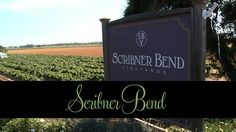 Scribner Bend Vineyards, Sacramento, CA