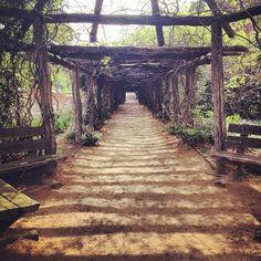 Coker Arboretum at UNC Chapel Hill.