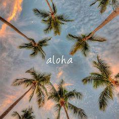 aloha - palm trees.