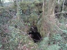 Small cavern under tree in forest near me - is it an ancient well or was it a hiding place once? Rosslyn Chapel, Hidden Places, Spirituality Books, Scotland, Ireland, Places To Visit, Earth, Tours, Fantasy
