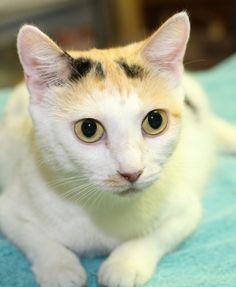 Adoptable Cat: Valerie