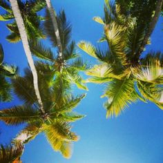 #summer #virginislands #palmtrees #adventure #amazing #photography