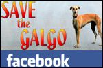 Galgo News on Facebook, help rescue Spain's greyhounds