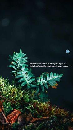 Karma, Plants, Islam, Profile, Plant, Planets
