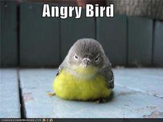 Google Afbeeldingen resultaat voor http://icanhascheezburger.files.wordpress.com/2011/08/funny-pictures-angry-bird.jpg
