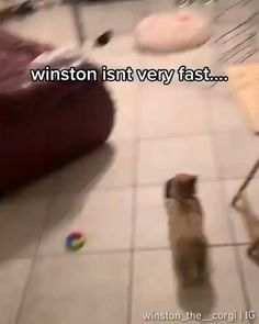 This little corgi thinks he's fast, and they let him believe he is. So adorable. Fluffy Animals, Cute Baby Animals, Vintage Images, Vintage Designs, Smiles And Laughs, Stupid People, Cute Animal Pictures, Corgis, Bts Taehyung