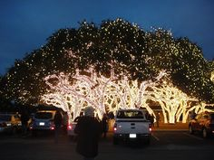Christmas 2010 South Texas in the Hill Country - these are a few of the lighted trees at the Pedernales Electric Cooperative in Johnson City, Texas. It's a spectacular sight!