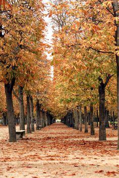 ღღ Autumn in Paris