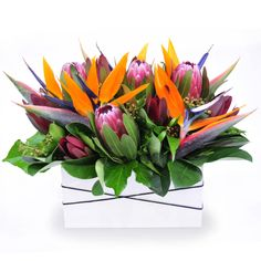 Cobar - a deluxe trough arrangement of long-lasting Australian natives and birds of paradise blooms.