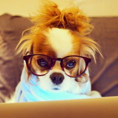 Of my gosh, that's me when I come home from work!...my animal spirit