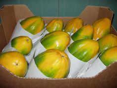 Papaya intenzza de La Punta del Hidalgo