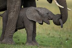 LUV me some baby elephants!