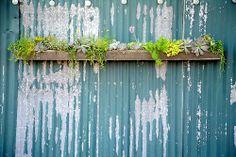 Container Garden, 2011 | Flickr -