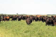 """Con un consumo interno bien abastecido entre las diferentes proteínas animales, la mesa sectorial consensuó un nuevo sistema de identificación del ganado y de lucha contra la evasión en el mercado cárnico. """"La idea es mejorar la competitividad y enfr"""