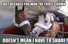 LOL Smokey is not too keen on sharing! #americanPharoah #triplecrown #Smokey