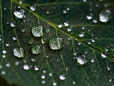 Water droplets on a leaf - macro photography projects nature 17 Awesome Macro Photography Ideas for Beginners Macro Photography Tips, Close Up Photography, Types Of Photography, Water Photography, Photography Projects, Photography Tutorials, Creative Photography, Digital Photography, Photography Classes