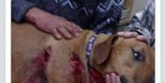 Justice for Shadow Shot by Fort Worth Police with a Shotgun