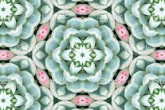 Lush Green Succulent Mandala for Modern Mindfulness Abstract Photos, Lush Green, Planting Succulents, Image Now, Meditation, Royalty Free Stock Photos, Spirituality, Doodles, Mindfulness