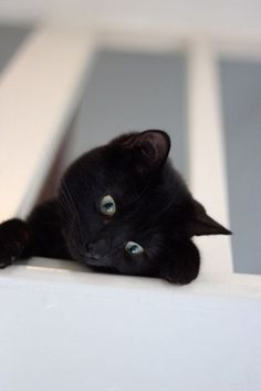 Lindo gatito negro