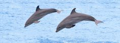 Leave the childbirth to the professionals, not the dolphins. Check this out to find out why!