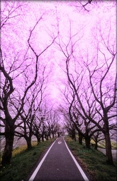 Cherry Blossom Tunnel, Tokyo, Japan