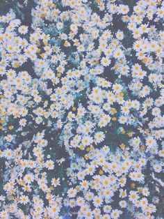 grafika flowers, daisy, and wallpaper Cute Wallpapers, Wallpaper Backgrounds, Daisy Wallpaper, Iphone Wallpaper, Iphone Backgrounds, Screen Wallpaper, Wild Flowers, Beautiful Flowers, Flowers Nature