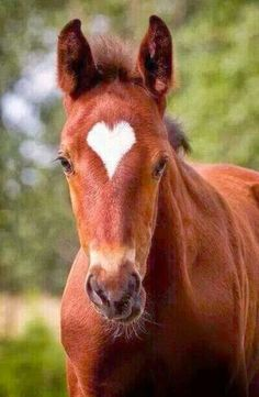 All the pretty horses. So elegant and pale, an absolute beauty. And damn, she knows how to handle horses too All The Pretty Horses, Beautiful Horses, Animals Beautiful, Beautiful Mind, Cute Baby Animals, Animals And Pets, Funny Animals, Cute Horses, Horse Love