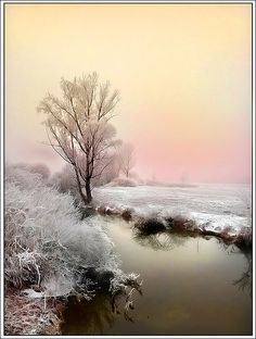 This reminds me of Wisconsin in the winter, so very quiet.   Calm by Jean-Michel Priaux, via Flickr
