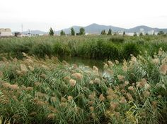 Un petit aiguamoll amb molta vida: Can Cabanyes, a Granollers #sortirambnens