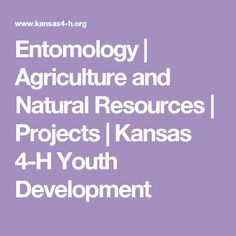Entomology | Agriculture and Natural Resources | Projects | Kansas 4-H Youth Development