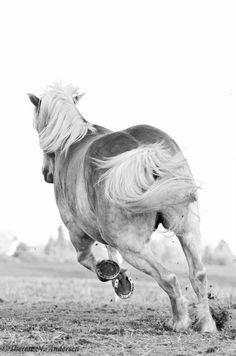Horse 15 Animal Nature Friends Beautiful Odd-toed Ungulate Mammal Gallop Poster