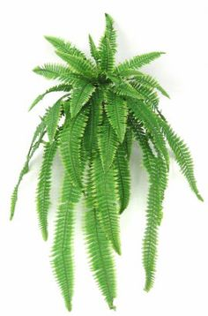 This beautiful artificial trailing fern plant looks beautiful simply potted in a decorative planter with it's cascading trails or used as a hanging plant showing off the elegant fronds