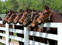 Line up Race Horses!