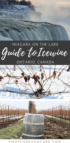Niagara on the lake wineries. A foodies guide to icewine. #icewinefestival #niagara #foodie
