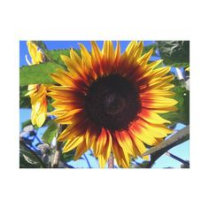 Brilliant Sunflower Wrapped Canvas Canvas Prints - Closeup photograph of a brilliant yellow sunflower with a dark center.