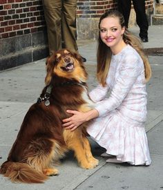 "Amanda Seyfried Has An Adorable And Talented Dog…check out how well-trained he…:: You'll find lots of ""Awww!"" and ""Oh My Gosh How Cute!"" on our Adorable Dog Photos board! More Dog obedience training Information Best of Online Dog Training. Amanda Bynes, Amanda Seyfried Dog, Amanda Seifried, Blue Merle, Celebrity Dogs, Celebrity Gossip, Famous Dogs, Famous People, National Puppy Day"