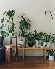 awesome 56 Easy Plants Design For Indoor Decoration  https://decoralink.com/2018/03/09/56-easy-plants-design-indoor-decoration/