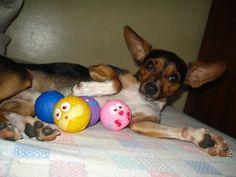 Onde tem Pikachu ai tem suas bolas!