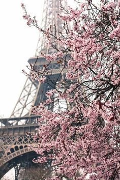 Paris Photography Paris Je taime Paris au printemps Pink Cherry Blossoms Eiffel Tower Paris Home Decor Blush Pink Paris in Bloom Pink Paris, I Love Paris, Paris Paris, Paris Flat, Paris 2015, Montmartre Paris, Paris Cafe, Beautiful World, Beautiful Places
