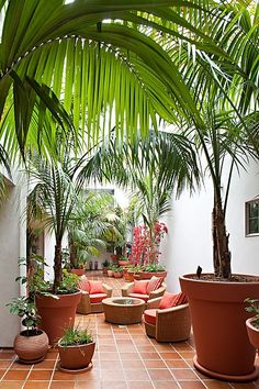 Eclectic Patio with exterior tile floors Green Indoor plants Tropical Boho Bohemian Relax Nature Hippy Bold Paint Styling Interior Design Home Botanical tropics palm plant style design nature natural house Outdoor Rooms, Outdoor Gardens, Outdoor Living, Outdoor Decor, Tropical Patio, Tropical Plants, Modern Tropical, Tropical Homes, Tropical Bathroom