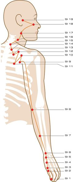 Intestino Delgado Acupuncture Points Repinned http://www.medischeqigong.com/ http://www.academ.nl/ #acupuncture