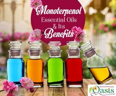 It's time you should get acquainted with the benefits of 'Monoterpenol Rich Essential Oils'. #monoterpenol #essential_oils #aromatherapy #benefits_essential_oils