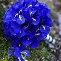 paper flower bouquet of deepest blue-purple iris and matching boutonniere