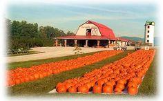 Granddad's Apples 2591 Chimney Rock Road Hendersonville, NC 28792 828-685-1685 GrandadsApples.com Apples, Pumpkins, Photo Opportunities, Barnyard, Bakery, Ice Cream, Apple Slushies, Corn Maze, Cow Train.