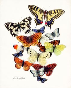 Butterfly Garden Art Print Collage Natural History Wall Decor 8x10. $15.00, via Etsy.