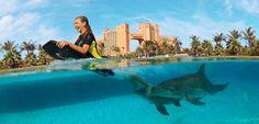 Dolphin Cay deep water swim with a Dolphin at Atlantis Resort, Paradise Island in the Bahamas: http://www.atlantis.com/thingstodo/dolphincay.aspx