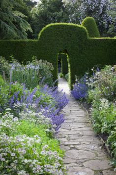 Nepeta, astrantia and iris in The Old Garden at Hidcote, Gloucestershire, in…