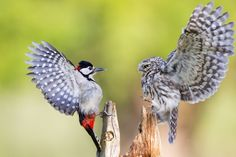 Nature - Week 3 Gallery - National Geographic Photo Contest 2013 - National Geographic