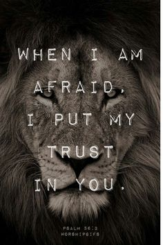 Jesus - The Lion of Judah !!!  Revelation 5:5 The Lion of Judah will break every chain, and give to us the victory again and again !