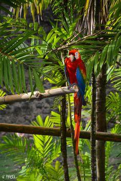 Martinique, Zoo de l'Habitation Latouche